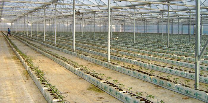 Ácidos húmicos para cultivo hidropónico
