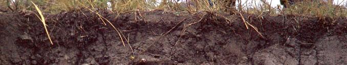 Materia orgánica del suelo