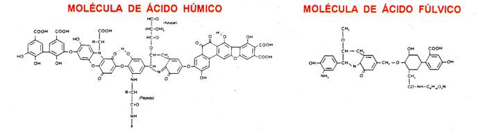 Moléculas de los ácidos húmicos y ácidos fúlvicos