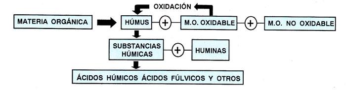 Proceso de transformación de la 'materia orgánica'